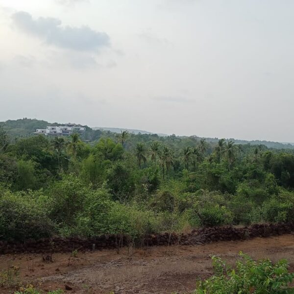 view of the plot